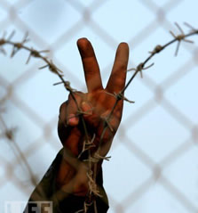 Barbwire fence | Peace